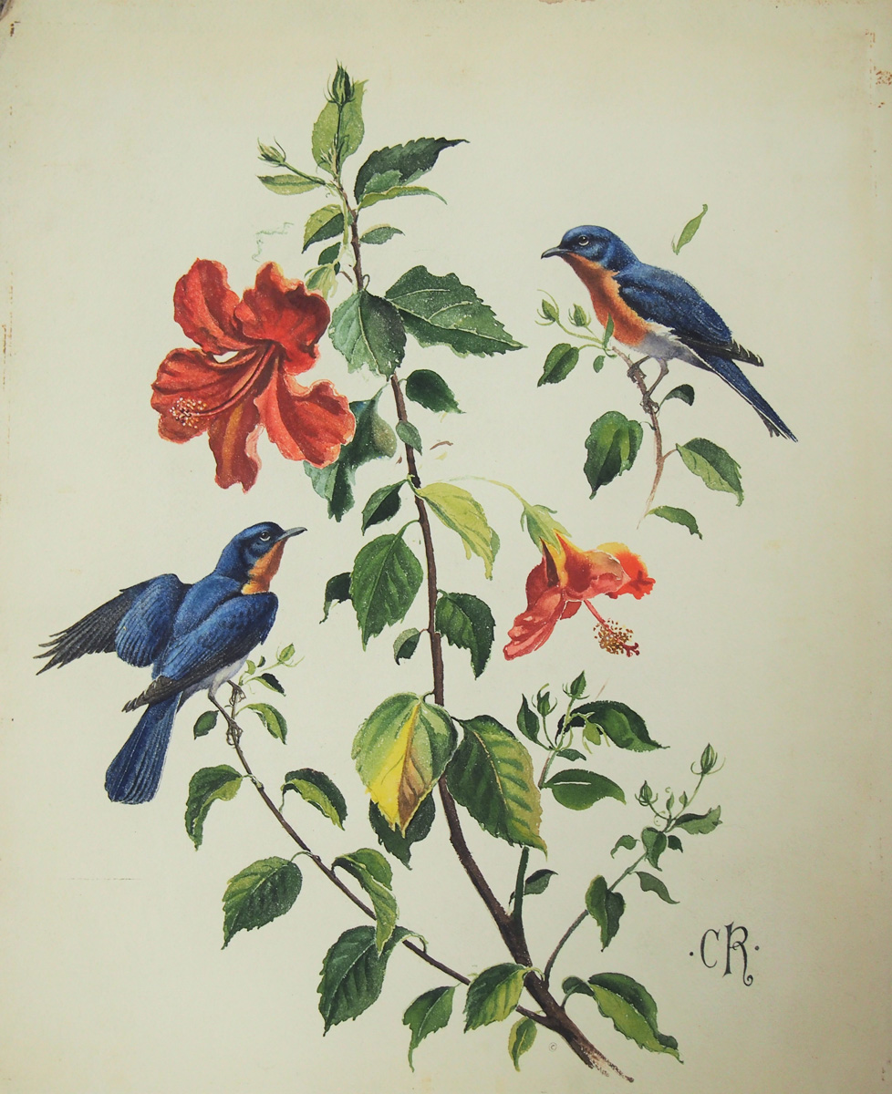 Bluebird (and Hibiscus) Image